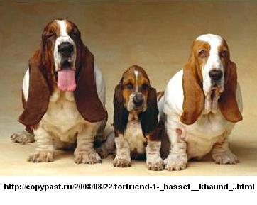 Собак виды собак фото и описание